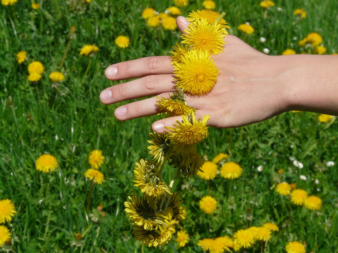 Blumen Löwenzahn Wahrnehmung Spüren Feelings