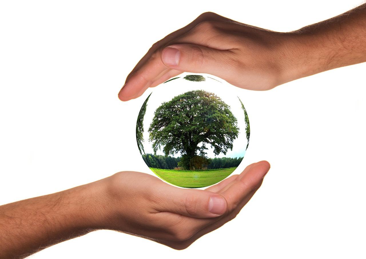 Umweltschutz Baum Nachhaltigkeit