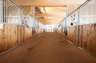 Heldenberg Lipizzaner Pferd weiß spanische Hofreitschule