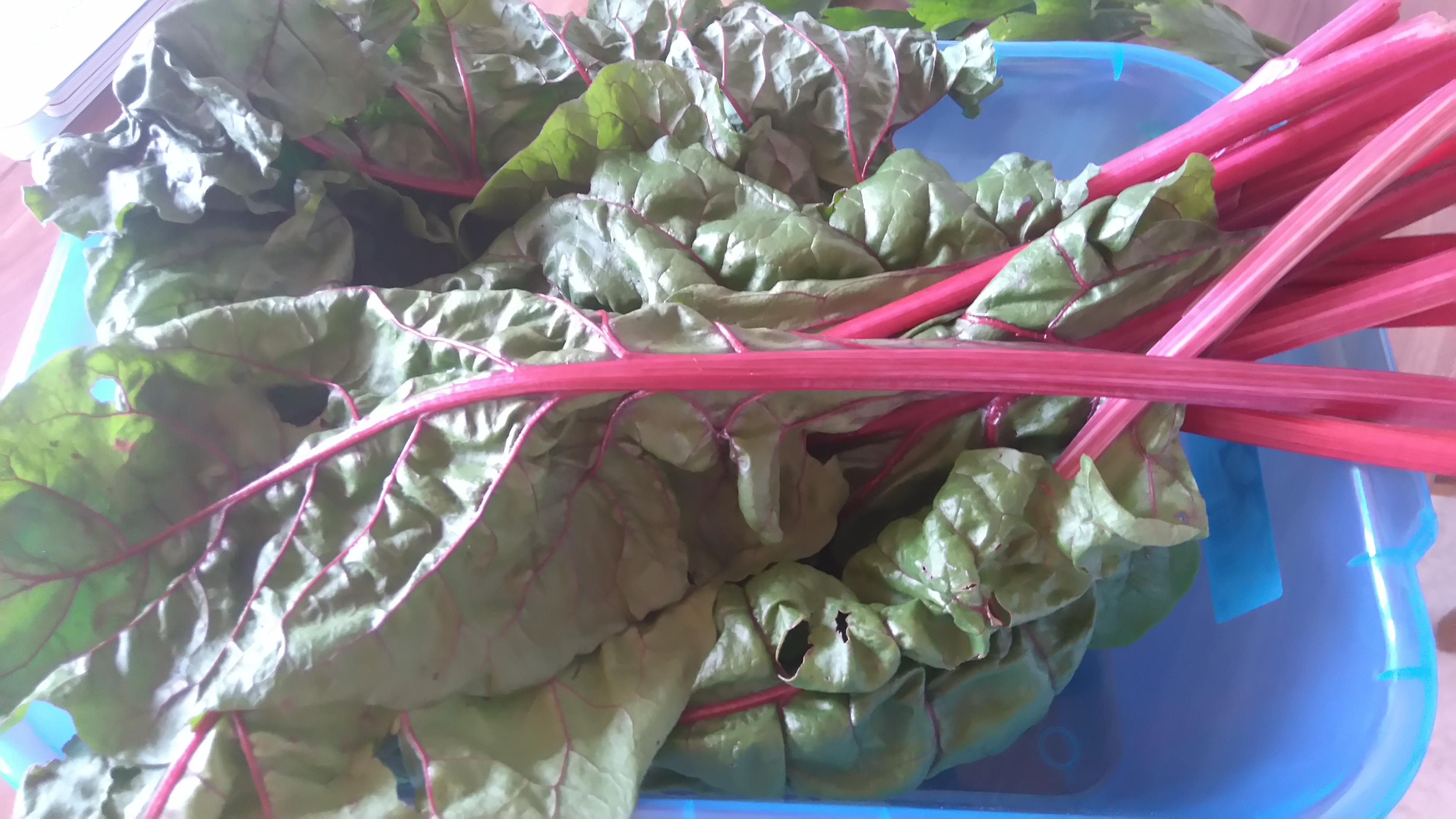 Mangold Garten Gemüse