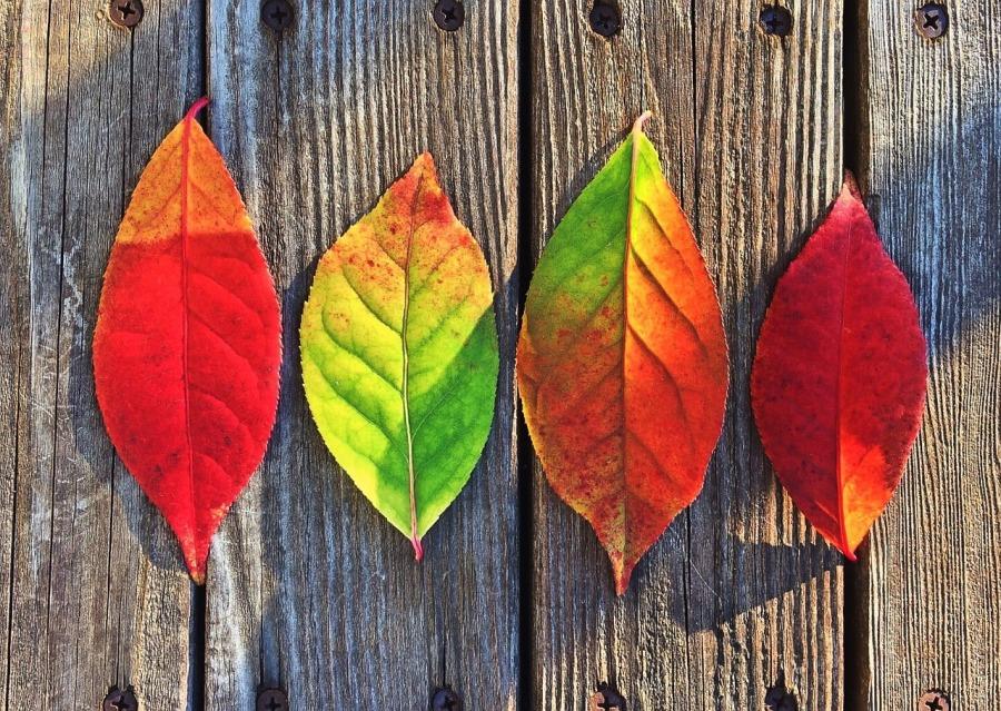 bunte Blätter Herbstlaub Herbst