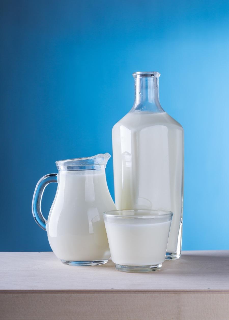 Milch Kuh Kuhmilch Unverträglichkeit