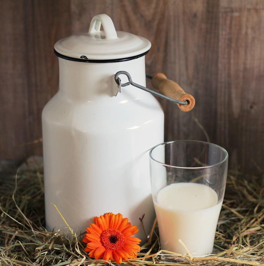 Milch Milckanne Milchglas Kuhmilch Schafsmilch Ziegenmilch
